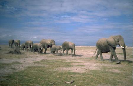 kenia-safari-kpg.jpg