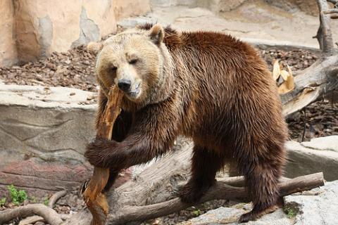 zoo-osos.jpg